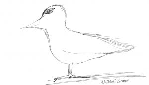 Luonnostelma paikoillaan seisovasta linnusta, joka katsoo vasemmalle päin